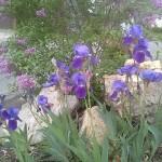 flowers_spring2014